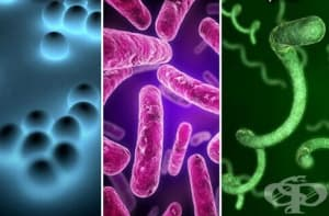 Морфогенеза на бактериалните увреждания на клетките