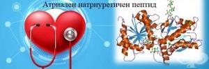Атриален натриуретичен пептид