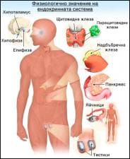 Физиология на ендокринната система