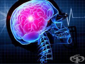 Физиология на нервната система