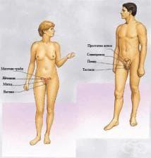 Физиология на репродуктивната система