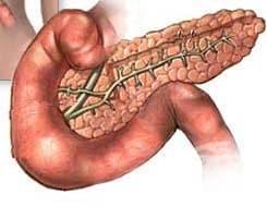 Значение на задстомашната жлеза