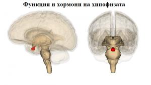 Функция и хормони на хипофизата