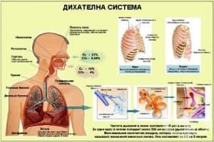Нарушения на дихателната функция