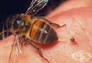 Какъв е рискът при алергия след ухапване от насекоми?