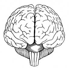 Причини от страна на централната нервна система