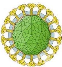 Какъв е имунитетът при рубеола?