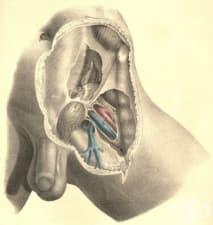 Каква е анатомията на ингвиналния канал?