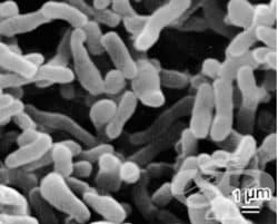 Ролята на микроорганизмите