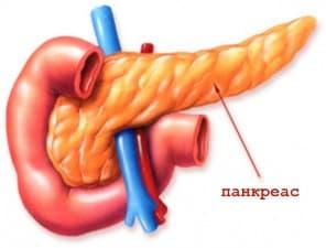 Анатомия на панкреаса