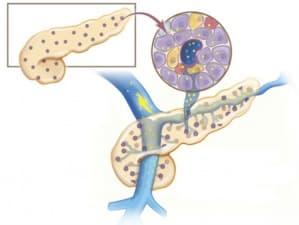 Функция на панкреаса