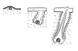 Произход и развитие на косата и космите