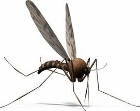 Кои заболявания пренасят комарите?