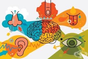 Психологическо използване на сетивата в маркетинга