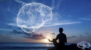 Йога и медитация правят положителни промени в нашия мозък