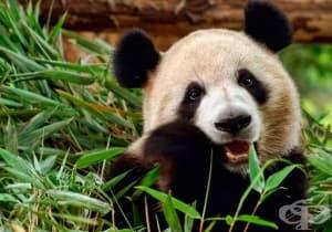 Познавате ли добре животинския свят?