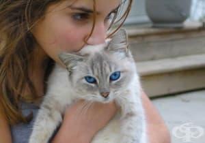 Използвайте 14 трика, които могат да улеснят живота на всеки собственик на котка