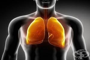 Как да пречистим дробовете си от никотина, катрана и други вредни вещества?