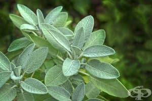 Открийте 5 здравословни ползи на градинския чай
