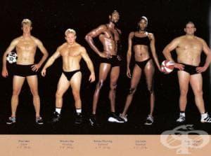 Тренировка и хранене според типа тяло