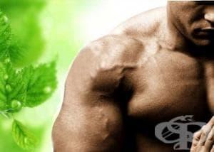 Тестостерон стимулиращи добавки в спорта (тестостеронови бустери)