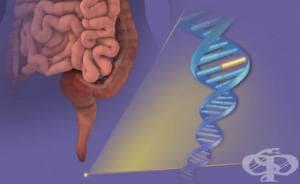 Генетични изследвания при рак на дебелото черво