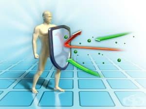 Подсилване на имунната система - имуномодулатори