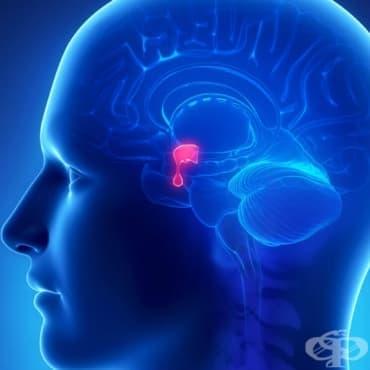 Алтернативно лечение на аденом на хипофизата - изображение