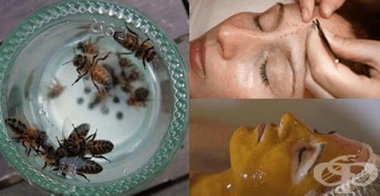 Апитерапия - лечебната сила на меда - изображение
