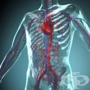 Аргининът воюва със сърдечните заболявания - изображение