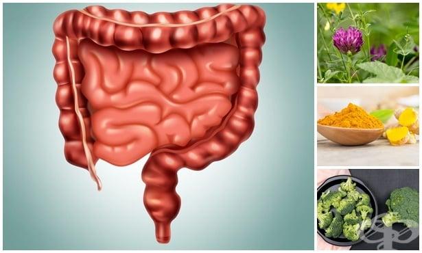 Билки и естествени средства за лечение на полипи на дебелото черво - изображение
