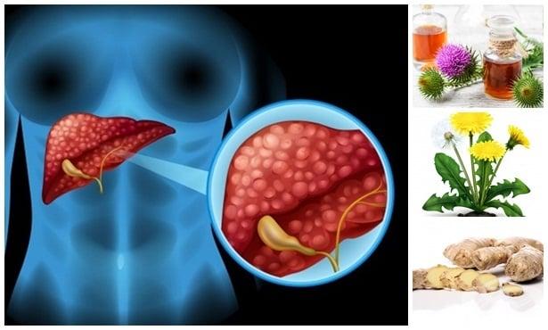 Билки за лечение на черния дроб - изображение