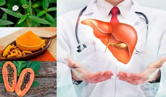 Билки и диета при лечение на цироза на черния дроб - изображение