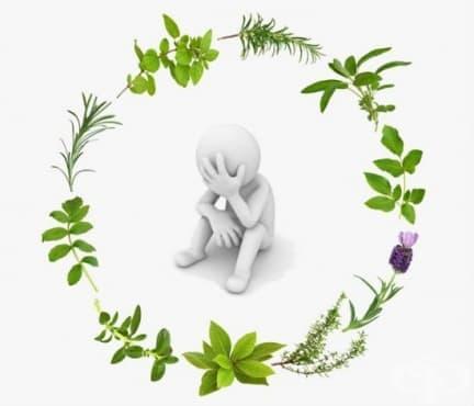 Чести грешки и заблуди при лечение с естествени средства - изображение
