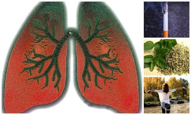 Детоксикация на белия дроб по естествен път - изображение