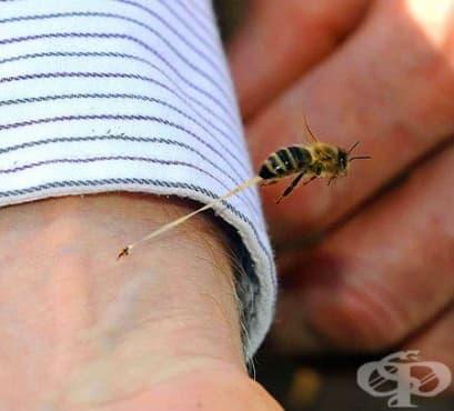 Домашни средства при ужилване от пчела и оса - изображение
