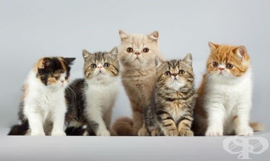 Фелинотерапия или как котките ни лекуват - изображение