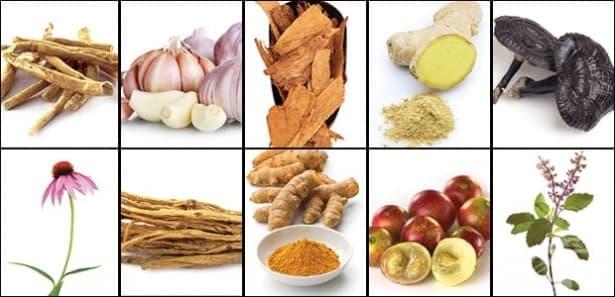 Храни и билки за силна имунна система - изображение