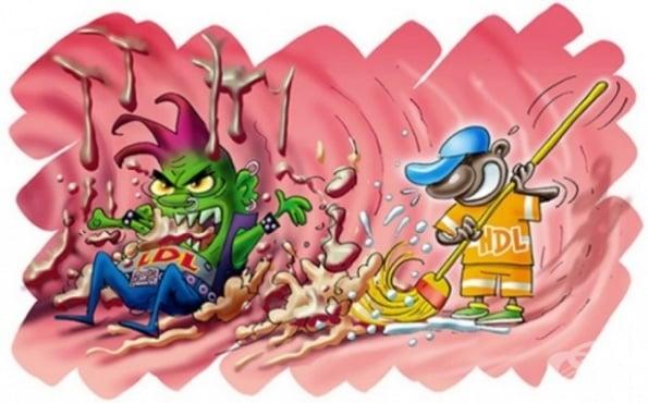 Как да свалим холестерола и триглицеридите без лекарства - изображение