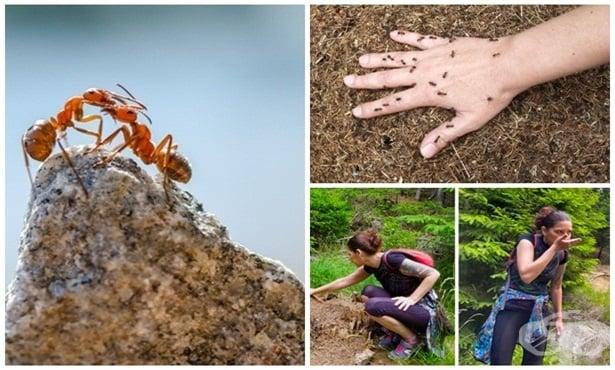 Защо и как мравуняците могат да са полезни за здравето - изображение