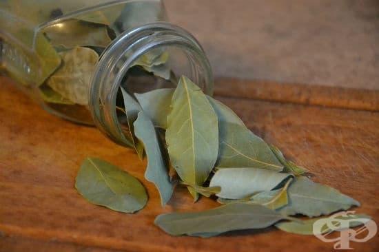 Лечебните свойства на дафинов лист - изображение