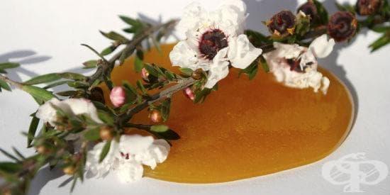 Медът от манука - природно оръжие срещу инфекции - изображение