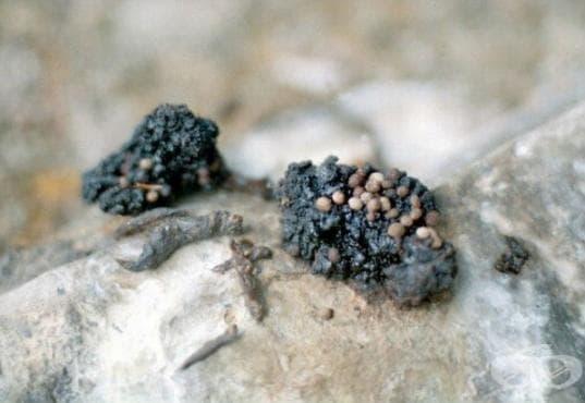 Мумио - ценното лекарство от природата - изображение