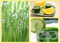 Ползи за здравето от житна трева - изображение