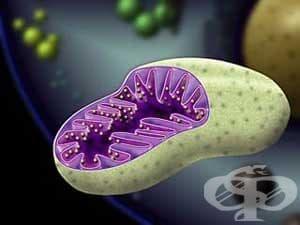Рибозоми - изображение