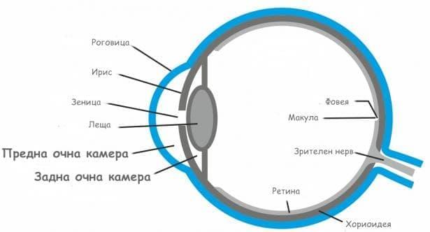 Предна и задна очна камера - изображение
