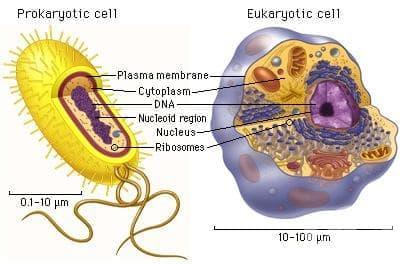 Клетка (Cellula) - изображение