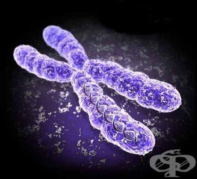 Хромозоми (Chromosomes) - изображение
