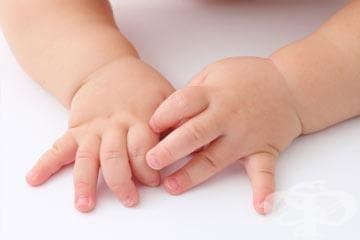 Ембрионално развитие на ноктите - изображение
