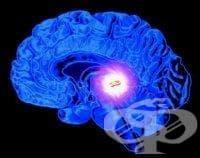 Хистологично устройство на епифизата - изображение